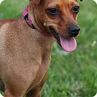 Adopt A Pet :: Selena - Lafayette, IN
