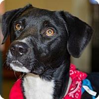 Adopt A Pet :: Jackson - Clovis, CA