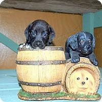 Adopt A Pet :: Tippy - Oakdale, LA