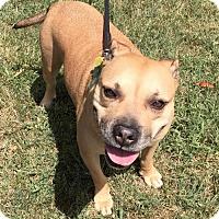Adopt A Pet :: Princess - Rockville, MD