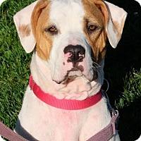 Adopt A Pet :: Fajita - Ann Arbor, MI