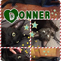 Adopt A Pet :: Donner - Ravenna, TX