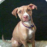 Adopt A Pet :: Hazel - Grand Rapids, MI