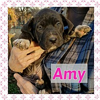 Adopt A Pet :: Amy - Newcastle, OK