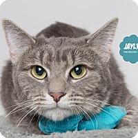 Adopt A Pet :: Jaylyn - Wyandotte, MI