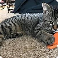 Adopt A Pet :: Chelsea - Toledo, OH