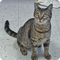Adopt A Pet :: Ronald - Chambersburg, PA