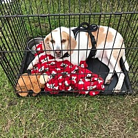 Adopt A Pet :: Lizzie - Morriston, FL