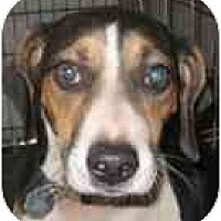 Adopt A Pet :: Eddie - Blanchard, OK