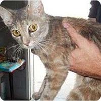 Adopt A Pet :: Selena - McDonough, GA