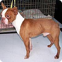 Adopt A Pet :: Mick Jagger - San Angelo, TX