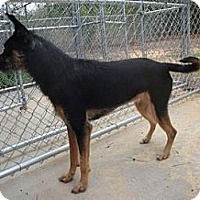 Adopt A Pet :: Tiny - Gainesville, FL