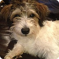 Adopt A Pet :: JAZZI - Mission Viejo, CA