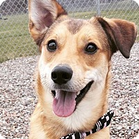 Adopt A Pet :: Bruno - New York, NY