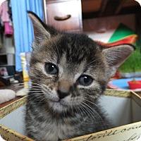 Adopt A Pet :: Raffles - Oxford, NY