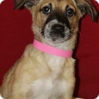 Adopt A Pet :: Kora - Waldorf, MD