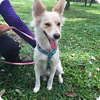 Adopt A Pet :: Sienna - Coral Springs, FL