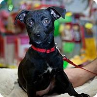 Adopt A Pet :: Pink - Great Bend, KS