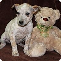 Adopt A Pet :: Plum - Salem, NH