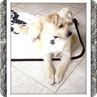 Adopt A Pet :: Adopted!!Maggie - TX - Tulsa, OK