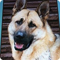 Adopt A Pet :: YOHANN VON NORBERT - Los Angeles, CA
