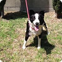 Adopt A Pet :: PRECIOUS - San Pedro, CA