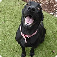 Adopt A Pet :: Sport - Towson, MD
