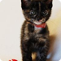 Adopt A Pet :: Smacks - Toccoa, GA