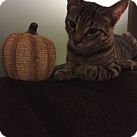 Adopt A Pet :: Zelda - Trevose, PA