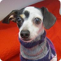 Adopt A Pet :: Harlee - Holton, KS