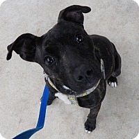 Adopt A Pet :: Holly - Hillsboro, OH