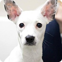 Adopt A Pet :: Harley- located  in MA - Allentown, PA