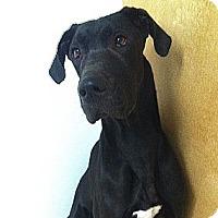 Adopt A Pet :: Sasha - Westpark, OH
