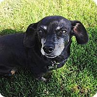Adopt A Pet :: Sugar - San Jose, CA