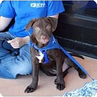 Adopt A Pet :: Luke - Minneola, FL