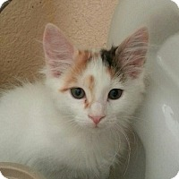 Adopt A Pet :: Peaches - Palmdale, CA