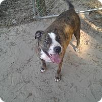 Adopt A Pet :: Bradley - St Simons, GA
