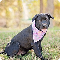 Adopt A Pet :: Blackie - Houston, TX
