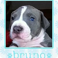 Adopt A Pet :: Bruno - La Quinta, CA