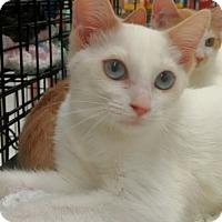 Adopt A Pet :: Rebel - Muskegon, MI