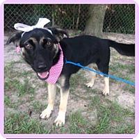Adopt A Pet :: Athena - Burlington, NJ