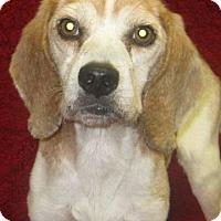Adopt A Pet :: Elvis - Savannah, GA