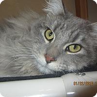 Adopt A Pet :: Huey - Ridgway, CO