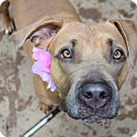 Adopt A Pet :: Joplin - Elizabethtown, PA
