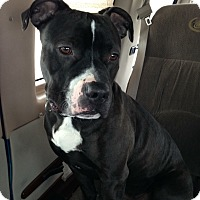 Adopt A Pet :: ACE - Pittsburgh, PA