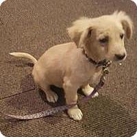 Adopt A Pet :: Chester - Crocker, MO