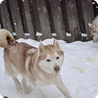 Adopt A Pet :: Shilo and Cheyenne - Shingleton, MI
