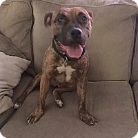 Adopt A Pet :: Arya - Franklinville, NJ