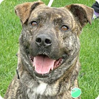 Adopt A Pet :: Captain - Garfield Heights, OH