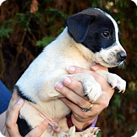 Adopt A Pet :: Bert - Bayshore, NY